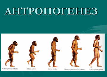 Проблема антропогенеза